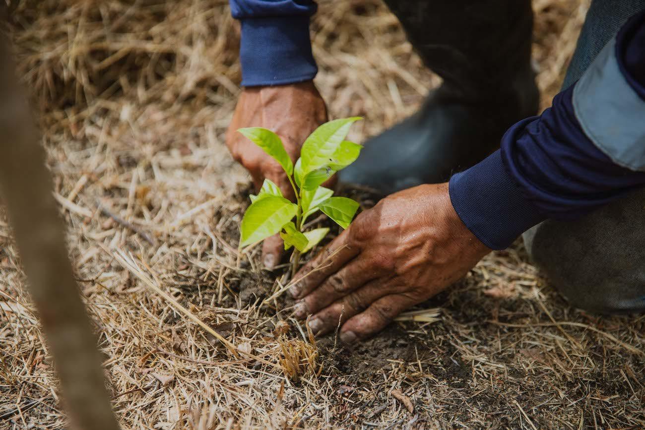 Bildnachweis: The Generation Forest